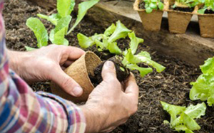 At first it is vital to find some simple form of occupation like gardening that won't feed the psychotic thinking.